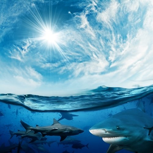In honor of Shark Week: 3 things the travel therapist can learn from sharks
