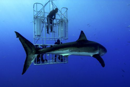 Enjoy #SharkWeek every week in these states as a Traveling Therapist