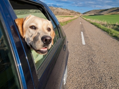 Traveling with a feline or canine friend is totally possible!